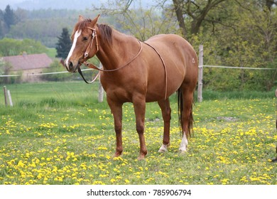 Beautiful horse. Horse shot outside. Western horse. Animal photography. Pure breed.