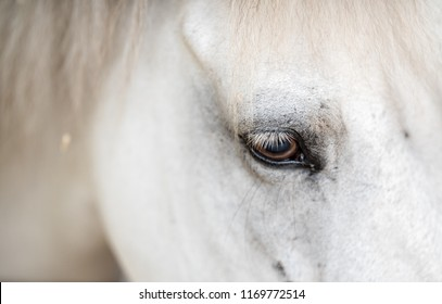 beautiful horse at the stable