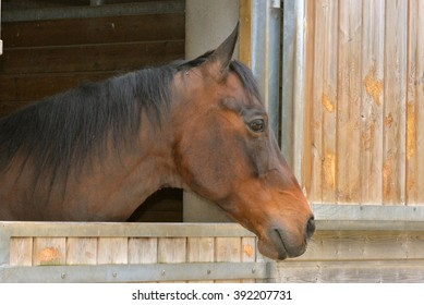 Beautiful horse in stable, head