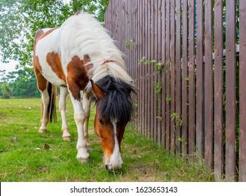 beautiful horse that grazes outdoors