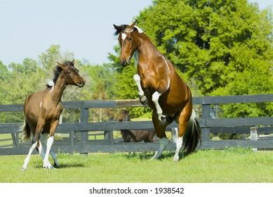 Beautiful Horses 62. See more in my portfolio