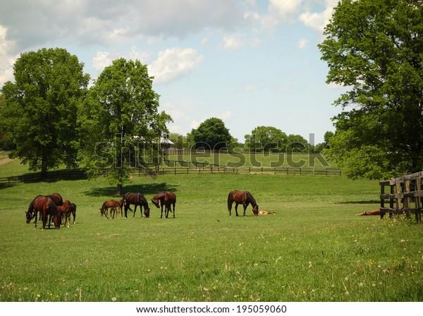Beautiful Horses Baby Ponies Grazing Field Stock Photo Edit Now 195059060