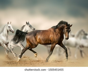 Beautiful horses in desert running wild