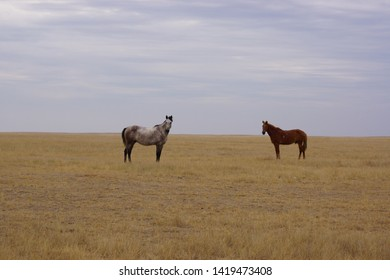 Beautiful horses grazing in the field. Stallions, mares and foals in the pasture. Stallions in the steppes of Kalmykia.