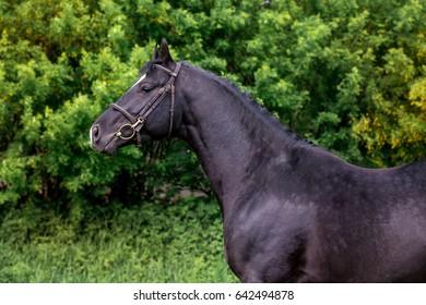 Beautiful horses in greenery