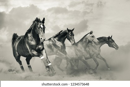 Beautiful horses herd in monochromatic tones