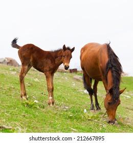 beautiful  horses meadow  rural  idyllic  background