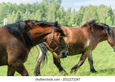 Beautiful horses on green field