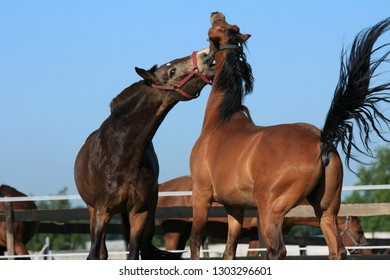 Beautiful horses on the stable in motion