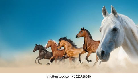 Beautiful horses on the wild against the blue skies
