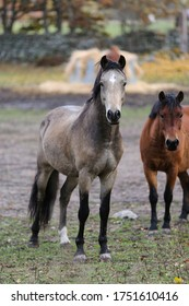 Beautiful horses in a paddock at autumn.