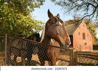 beautiful horses poland - portrait