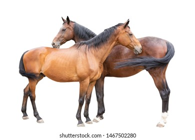 beautiful horses, racehorse, English racehorse, Ukrainian riding
