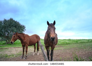 Beautiful horses in the ranch, against green meadow and blue sky during dusk.