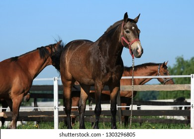 Beautiful horses in the stable