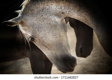 Beautiful horses, tenderness, and love pose