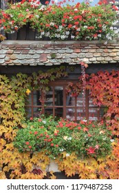 beautiful house covered with colorful leaves on it, colors of autumn: red, yellow, orange, old house with the window, view of autumn, plant on wall, vintage house in leaves