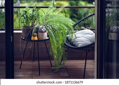 Schöne Hauspflanzen mit Wassertropfen auf Balkonen, Zamioculcas Zamiifolia, Wilde Fern, Ficus Ginseng