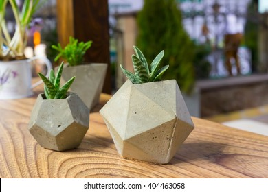 beautiful houseplants in trendy geometric pots