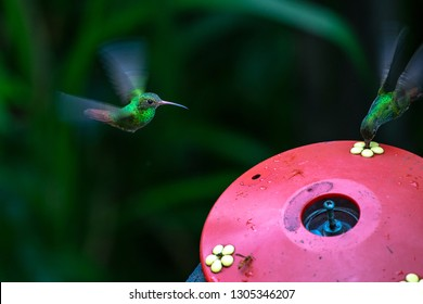 Beautiful hummingbirds share the sprue moving their wings at high speeds.