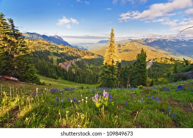 The Beautiful Hurricane Ridge at Olympic National Park with Wildflowers in foreground