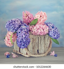 Beautiful hyacinth flowers in a basket on a textural background.
