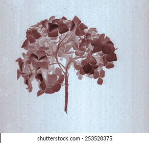 Beautiful hydrangeas, hortensia. Daguerreotype film grain. Illustration with botanical negative film x-rays scan. Canvas texture background. Vintage conceptual old retro aged postcard. Sepia, brown