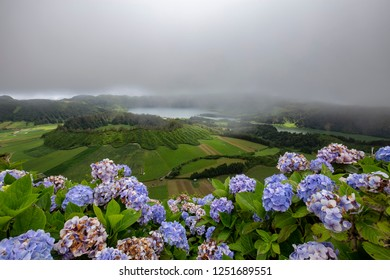 Beautiful hydrangeas on the rim of the Sete Cidades Crater in Sao Miguel.
