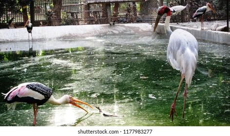 The beautiful iamge of birds have taken at the zoo of Mumbai City in Maharashtra, India.
