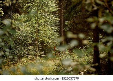 Beautiful idyllic forest scenery of a green mixed forest in Bavaria, Germany on a sunny late summer day in September