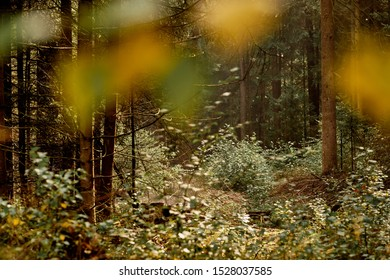 Beautiful idyllic forest scenery of a green mixed forest in Bavaria, Germany on a sunny late summer day in September with the leaves beginning to turn yellow