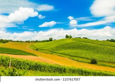 Beautiful idyllic green countryside landscape in Daruvar region, Croatia, vineyard on hills