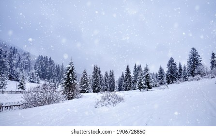 Beautiful idyllic landscape with evergreen tree forest covered in snow in wintertime