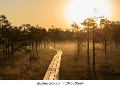 Beautiful idyllic morning light, during sunrise in bog boardwalk.