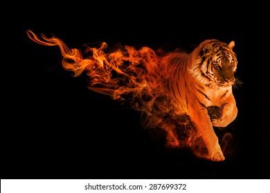 beautiful image of a amur tiger, animal kingdom, amazing tattoo, siberian tiger, jakarta, zoo