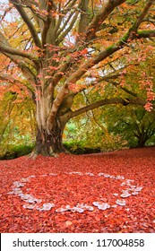 Beautiful image of Autumn Fall colors in nature of flora and foliage fairy ring of mushrooms