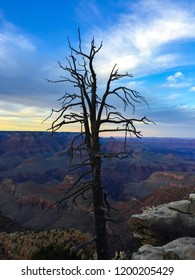 A beautiful image of a dead tree during sunset at Hopi Point in the Grand Canyon. This astonishing image does great for an iPhone background.