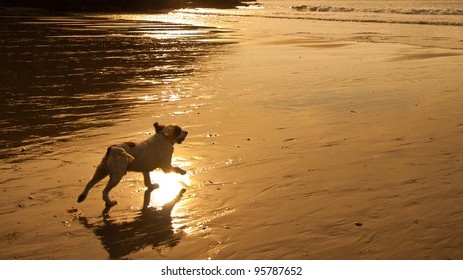 Beautiful image of dog running towards the sea at sunset with golden background and empty space for your text