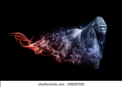 beautiful image of a gorilla.. animal kingdom. out of the smoke. wildlife picture. great  tattoo,zoo amazing wallpaper