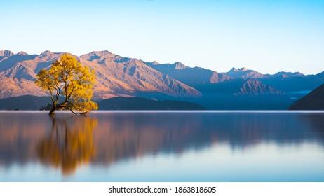 beautiful image of the iconic wanaka tree in wanaka south island new zealand. taken at sunrise with morning light bathing the mountains.