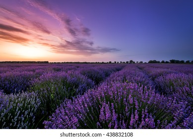 Beautiful image of lavender field Summer sunset.