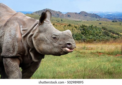 Beautiful image of One Horned Rhinoceros. Close up photo. Amazing portrait of an awesome rhino. Wildlife of a National Reserve. Wild powerful animals in National Parks. Wonderful landscape