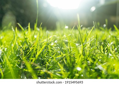 Beautiful image of sun gleaming through thr fresh grass