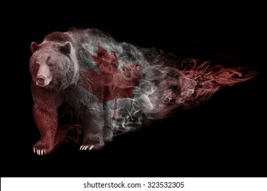 beautiful image of a wild bear with the canadian flag. color pink. wildlife picture. great  tattoo. love bird. tropical