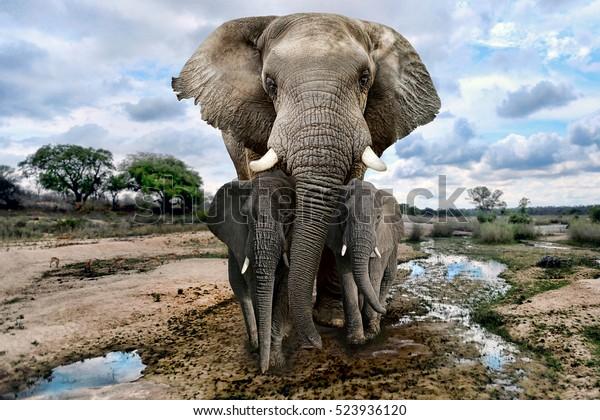 Hermosas imágenes de elefantes africanos en África