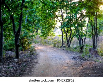 Beautiful Indian village path way road through a forest jungle in Purulia