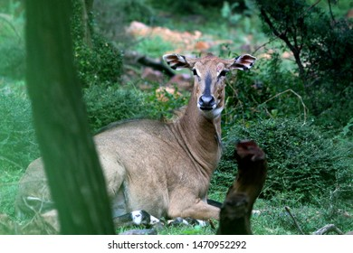 beautiful indian wildlife pics clicked in zoo