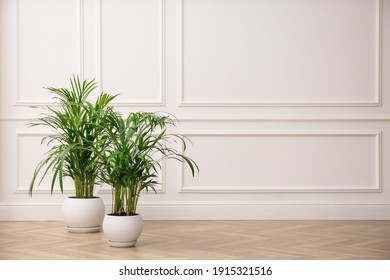 Beautiful indoor palm plants on floor in room, space for text. House decoration