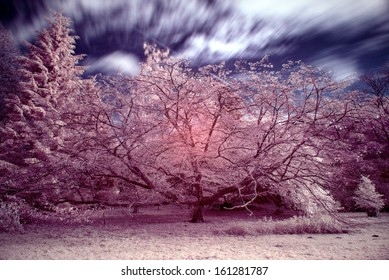 Beautiful infra red landscape forest image