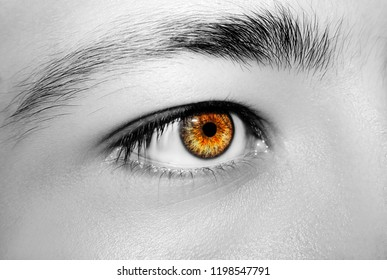 A beautiful insightful look man's eye. Close up shot
